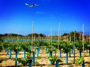 Take a tour through the vineyards of Curacao Winery