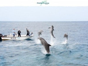 Dive with dolphins in open ocean of Curacao