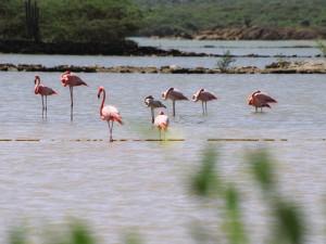 Nehmen Sie an kostenlosen Aktivitäten auf Curaçao teil