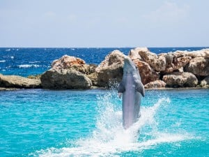 Top 10 Kids Activities Curacao