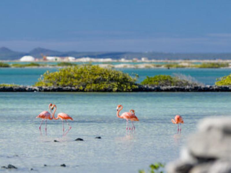 Lac Cai lagune (Bonaire)