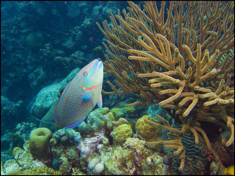 Underwaterworld Klein Bonaire