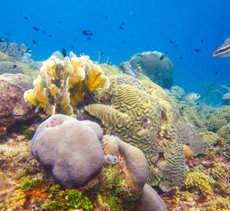 house reef at avila